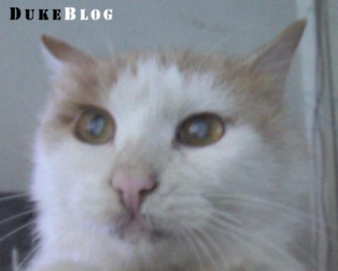 猫猫情侣个人档案完全曝光