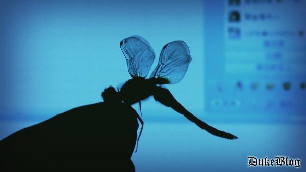 July 15, 邂逅一只红蜻蜓