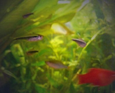 鱼缸又添新成员