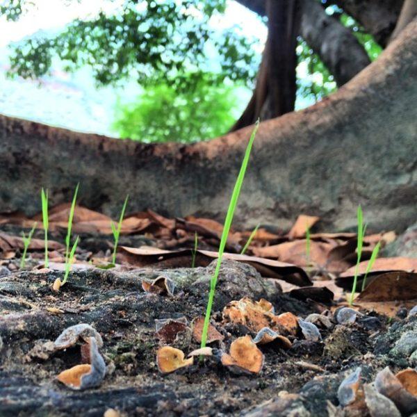 Tinny ones under the big tree