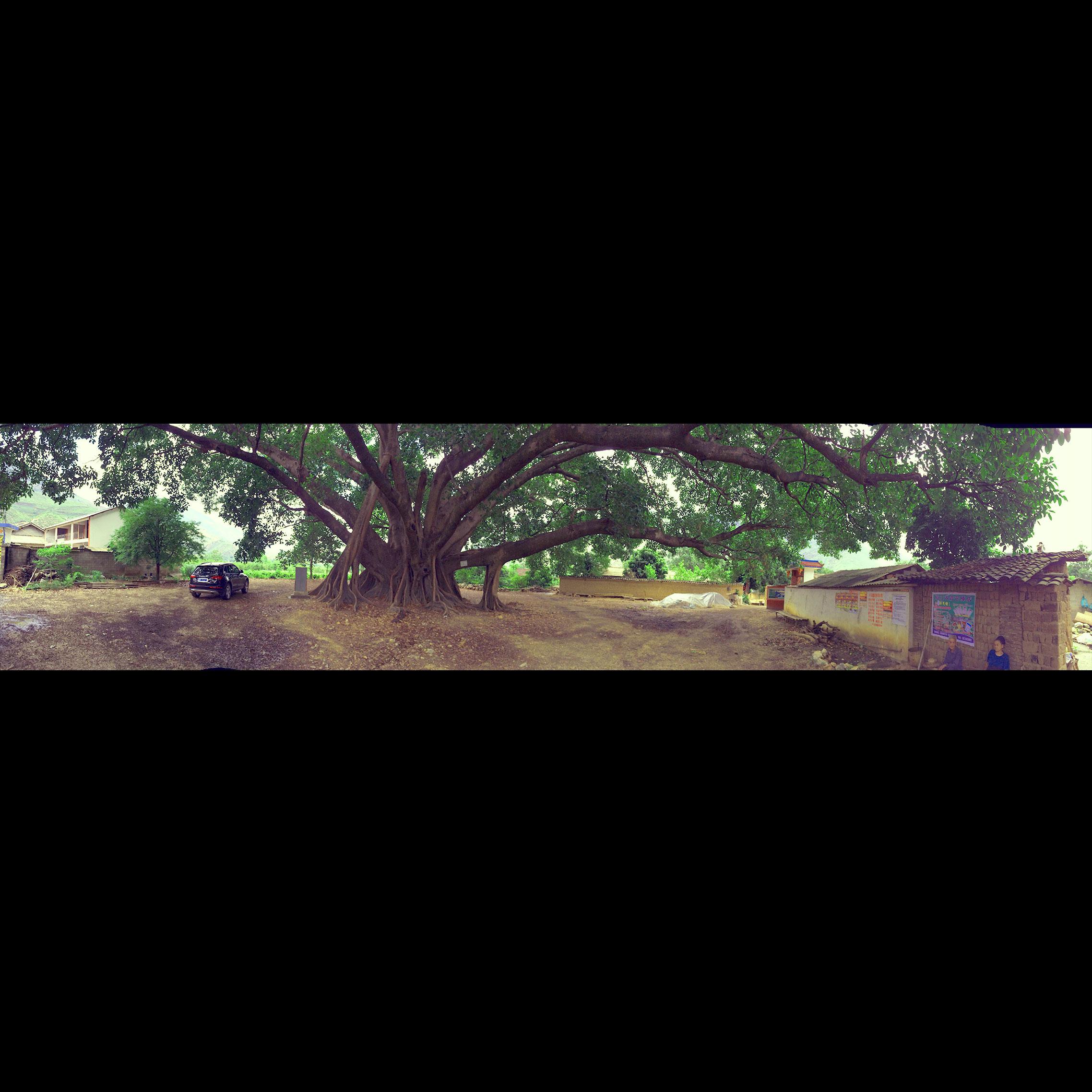 Super big tree