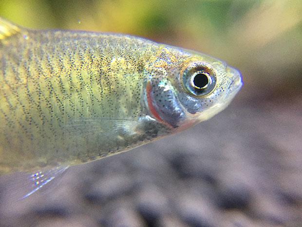 fish-tank-7