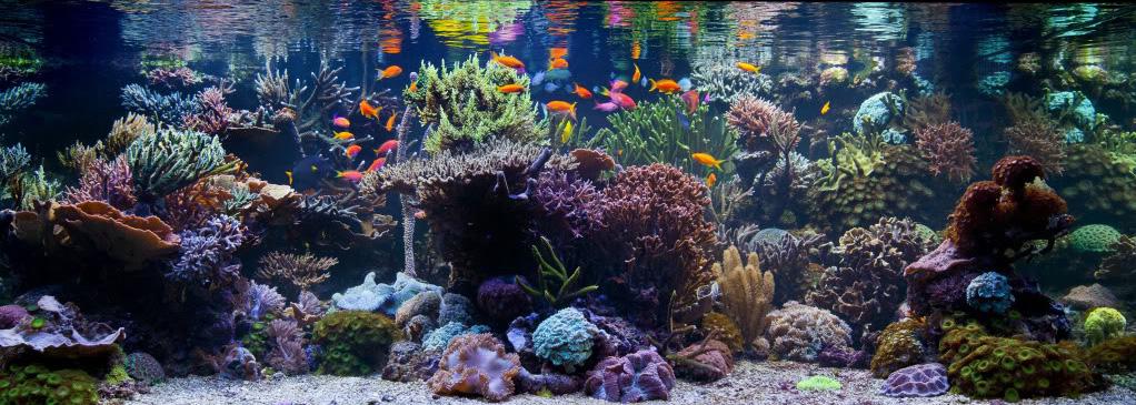 养海水观赏鱼初步