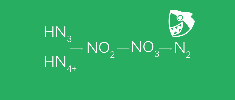养鱼的基础理论:氮循环