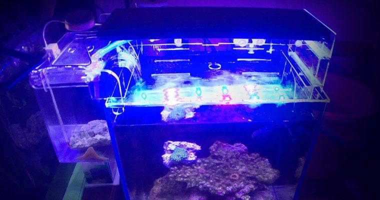 40方混养海水缸的最低价配置推荐