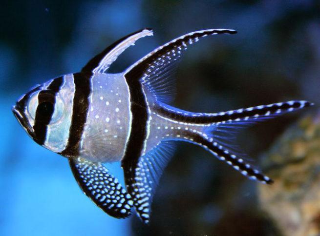 推荐新手养的鱼