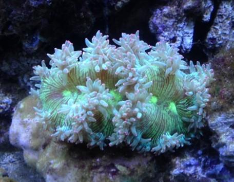 珊瑚的分类 软珊瑚 LPS SPS NPS