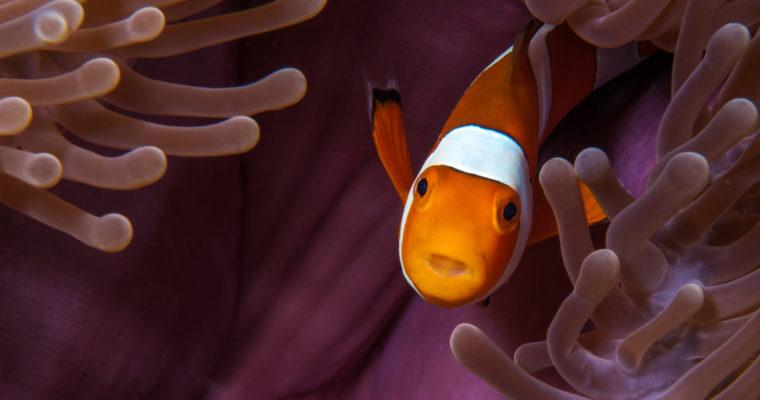 养海水鱼的注意事项